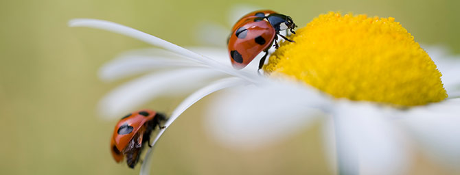 San Diego Events - Insect & Ladybug Festival at SD Botanic Garden