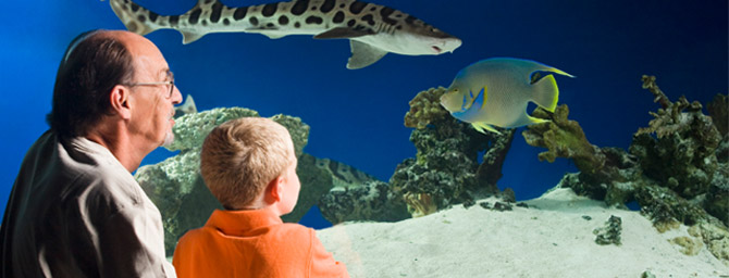 SeaWorld Summer Nights - May 23 through September 7