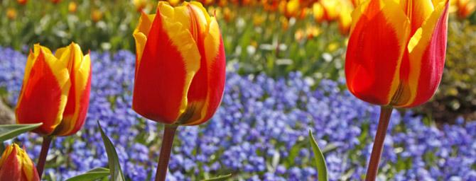 Coronado Flower Show 2015 - April 18 & 19