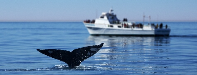 Things to Do in San Diego - Whale Watching